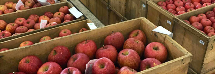 加工用の青森県産りんご